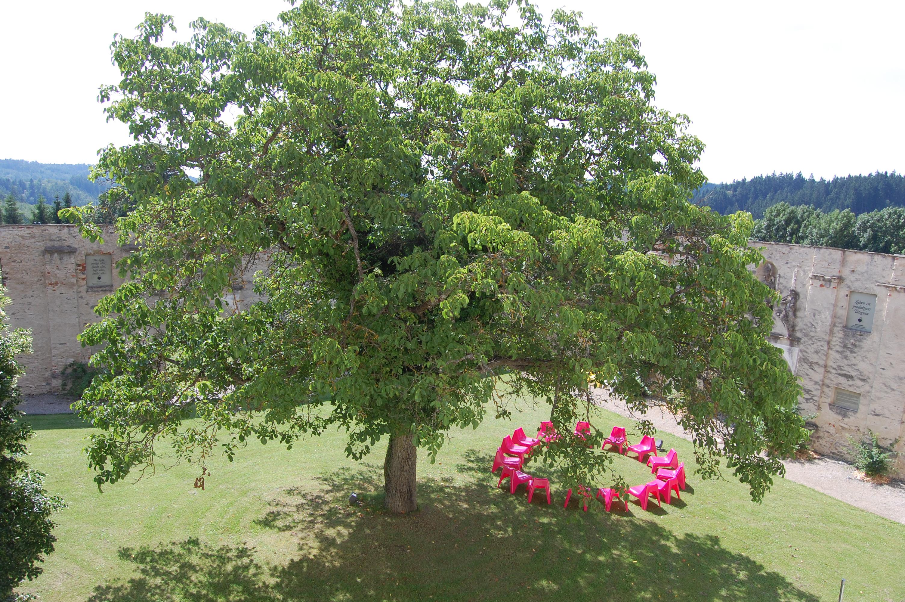 10 Tagesfasten nach Buchinger Kloster Pernegg